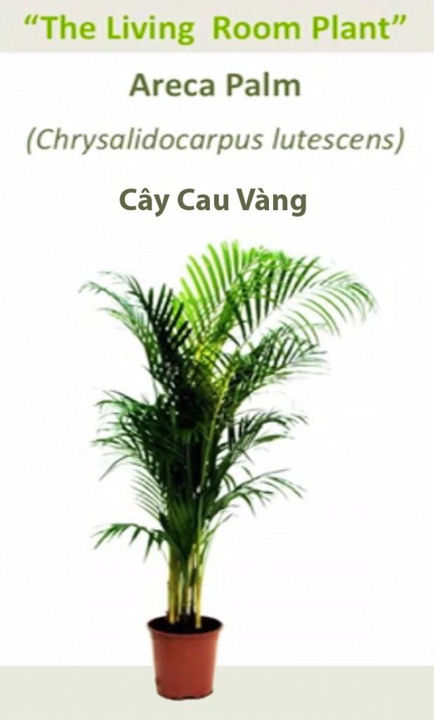 NoiThatNghiDuong-Cay-Oxy-Cau-Canh copy
